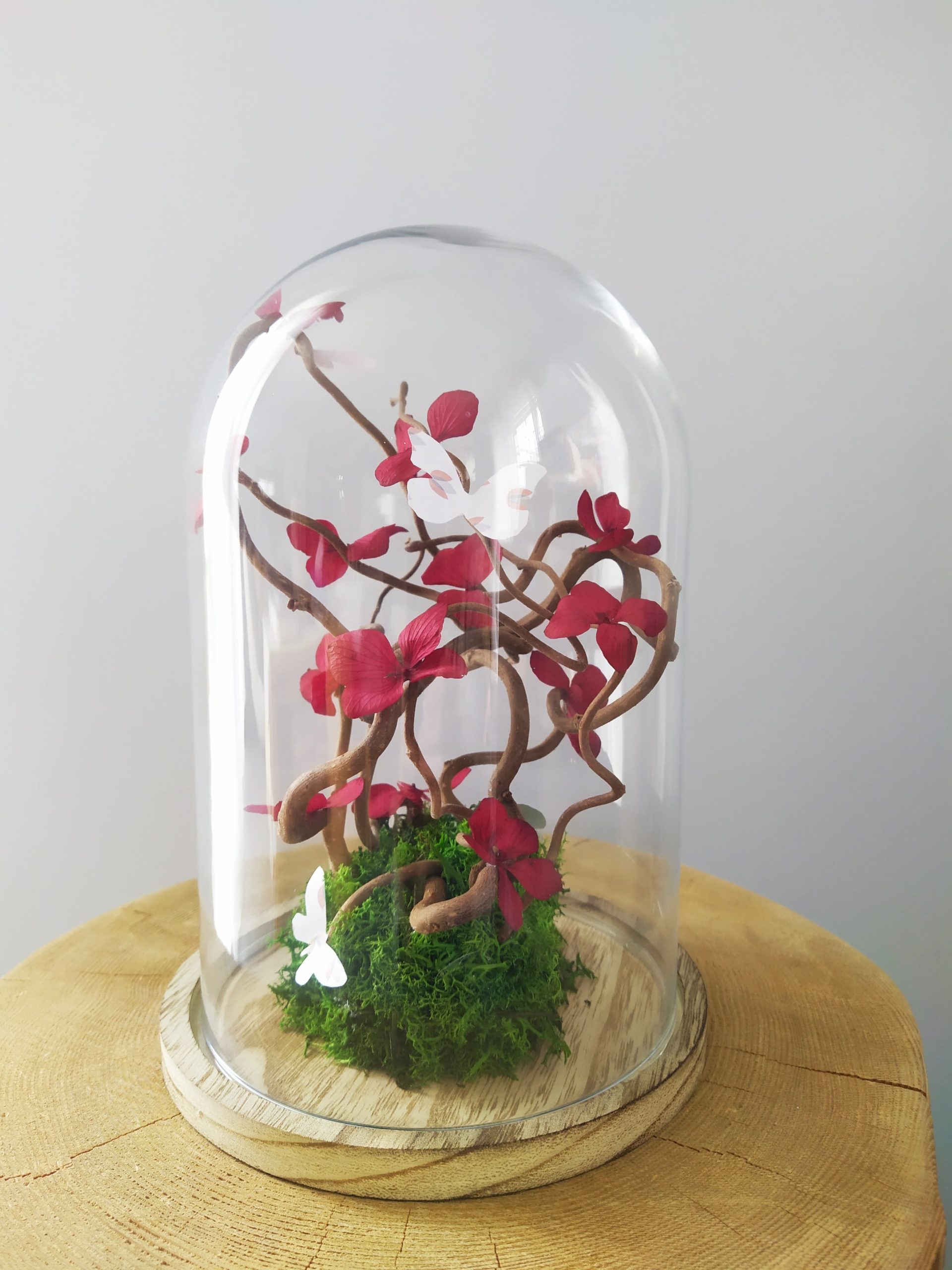 Cloche bonsaï-réf.91