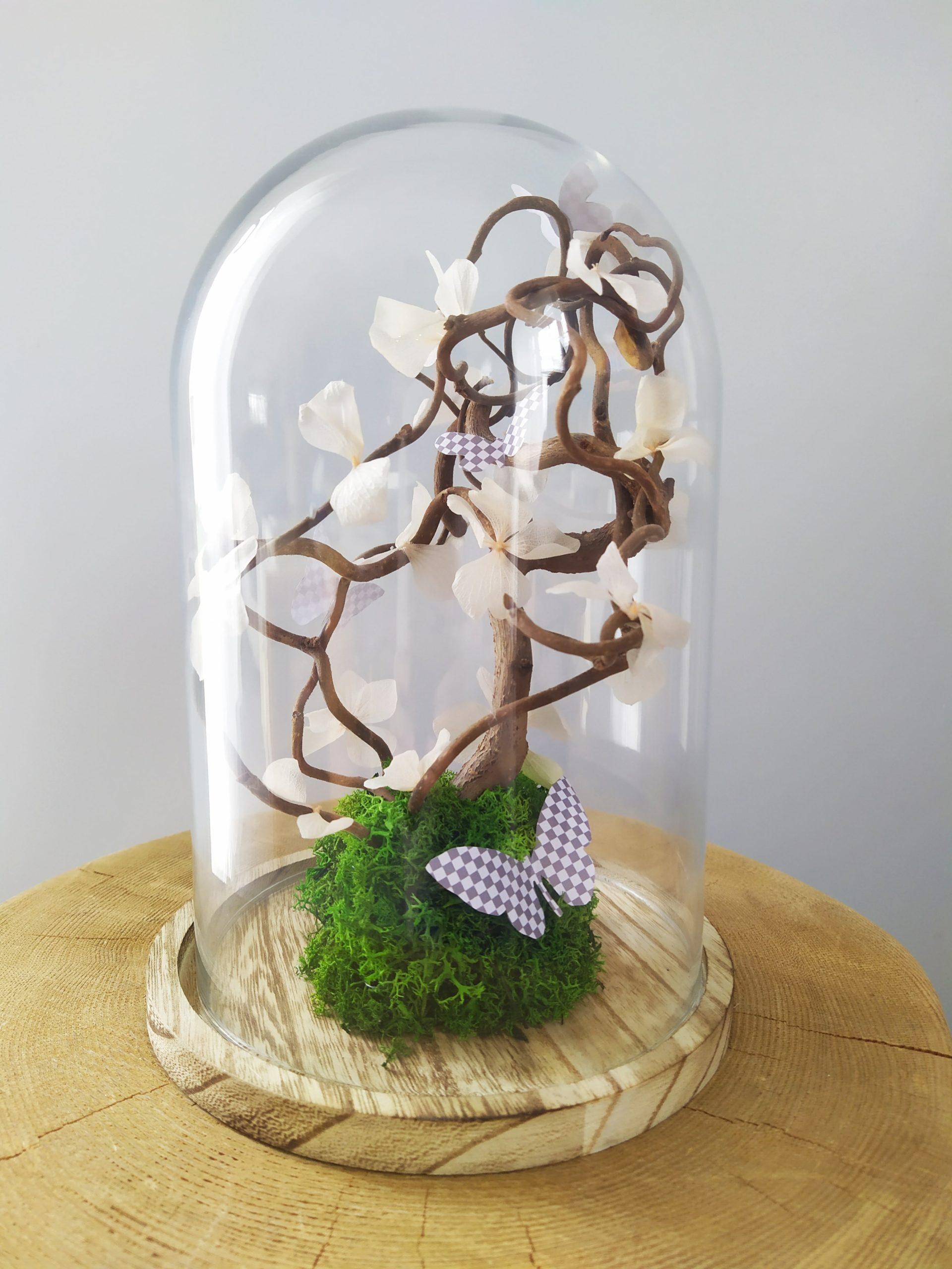 Cloche bonsaï